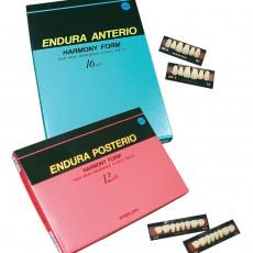 Endura-Teeth